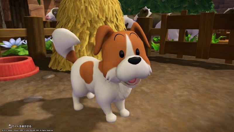 茶色のめずらしい柄の犬